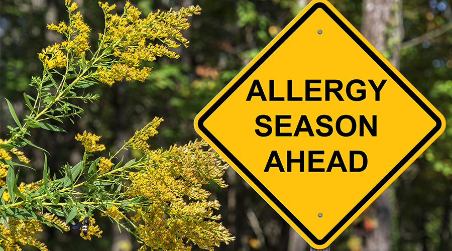 "Traffic warning sign with the words ""Allergy Season Ahead"" next to a blooming plant outside the forest."